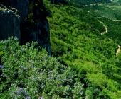 Foresta di Montarbu - Seui
